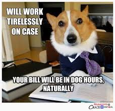 Dog Lawyer Meme - 30 best dog lawyer images on pinterest dog memes lawyer humor and