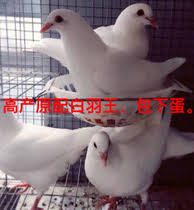 bird from the best taobao yoycart