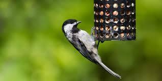 Backyard Wild Birds by 3 Simple Backyard Bird Feeders Wild Birds Unlimited Warson Woods