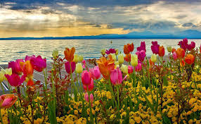 photo collection spring desktop backgrounds wallpapers