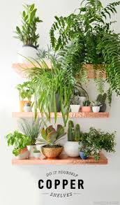 19 best plant shelves images on pinterest plant shelves plants