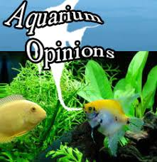 sb reef lights review aquarium led warranties problems reviews reef or planted my