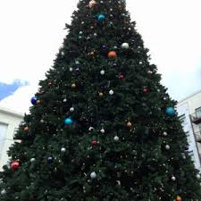 jacksonville christmas tree farms fun 4 first coast kids