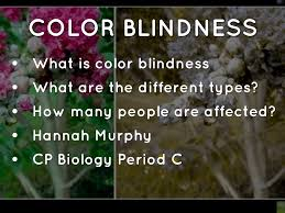 How Many People Are Color Blind Color Blindness Powerpoint By Hannah Elizabeth