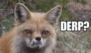 Fox Meme - fox memes foxes amino