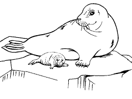 seal coloring page octopus and seal coloring page the inky octopus