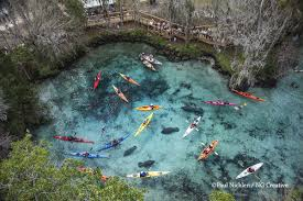 Florida Springs Map The Last Spring Protecting Florida U0027s Manatees U2013 National