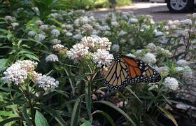 florida native nursery plant city fl native plants blog butterfly rearing cage gift shop landscape