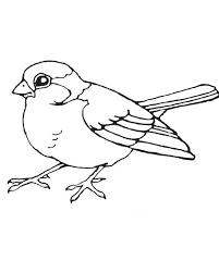 birds bird coloring coloring 4 bird