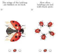 ladybug for iphone and ipad review learn about ladybugs in a fun