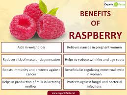 7 impressive benefits of raspberries organic facts