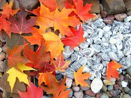 rock garden autumn leaves photograph by baslee troutman