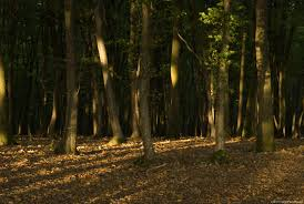 free big forest pictures high resolution images