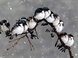 cute fall wallpaper for desktop cute birds in snow fall u0026 rain u2013 one hd wallpaper pictures