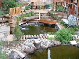 swimming pool to pond
