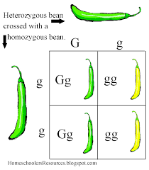 homeschooler u0027s resources biology 101 chapter 7 the 6th day