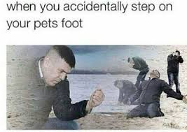 dopl3r com memes when you accidentally step on your pets foot