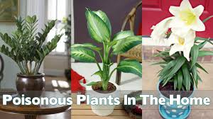poisonous plants in the home youtube