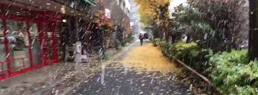 november tokyo november snow in tokyo the first since 1962
