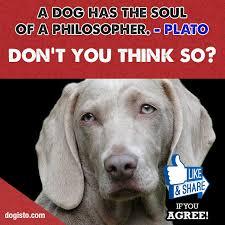 T Dog Meme - dog meme of the day dogisto