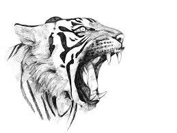 drawings of a tiger drawing pencil