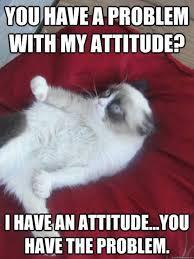 727 best grumpy cat images on pinterest funny kitties jokes and