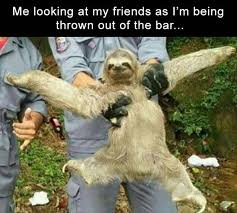Funny Sloths Memes - 33 ridiculous funny pics crazy memes team jimmy joe