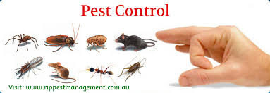Bed Bugs On Cats Encyclopediya Pest Control Central Coast