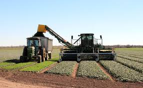 study at texas a u0026m agrilife center in uvalde may help boost texas