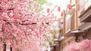 Peinture Cerisier Japonais by Cerisier Japonais Banque D U0027images Vecteurs Et Illustrations