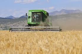 montana malt booming barley business supplies local brews