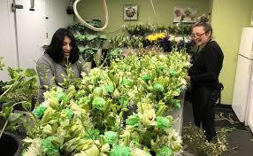Floral Design Business From Home Mercury Messenger Ftd Featured Florist Emil Yedowitz Florist