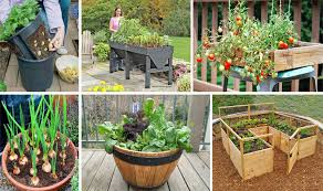 Vegetable Container Garden - diy healthy and organic vegetable container garden u2013 cancer remedies
