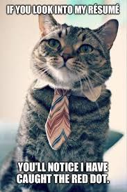 Success Cat Meme - jobs jobs jobs november 24 lexis byron bay blog