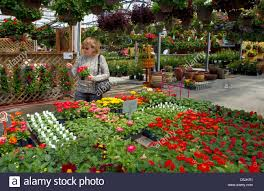 customer shopping for flowers at a nursery in jerome idaho usa