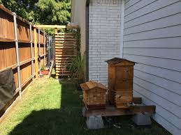 urban flow hive questions beekeeping basics flow forum