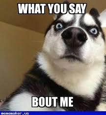 Wolf Meme - 85 best wolf meme creator images on pinterest wolf meme new memes
