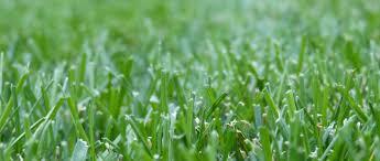 fond du lac lawn care gimme a break lawn maintenance