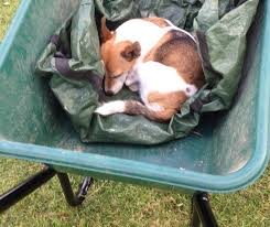 everything in the garden is not rosy u2014 brilliant family dog