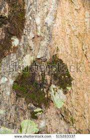 popular free tree bark backgrounds textures with green mold and