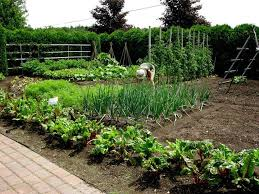 How To Start A Garden Bed 255 Best Images On Pinterest Area Rugs Outdoor Spaces