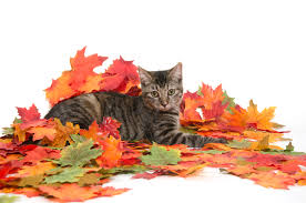 thanksgiving pet photos fall seasonal poisons toxic to dogs and cats