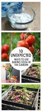 64 best images about tips and tricks on pinterest gardens