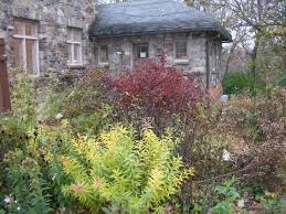 indiana native plants the gathering garden friends of cold spring