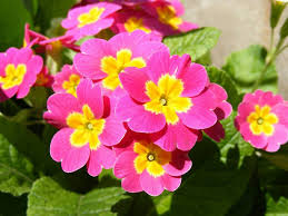 Fragrant Bedding Plants Which Are The Most Popular Winter Bedding Plants 1body1health