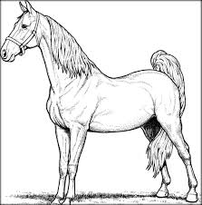 realistic horse coloring pages for adults color zini
