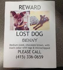 5 best images of lost dog flyer lost missing dog flyer lost dog