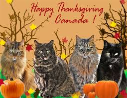 house panthers canadian thanksgiving wishes from julie