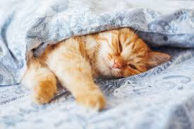 Katze Schlafzimmer Ja Bett Nein 9 Gründe Warum Das Leben Als Katze Viiiel Einfacher Ist Watson