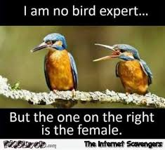 Meme Expert - i am no bird expert but the one on the right is the female funny